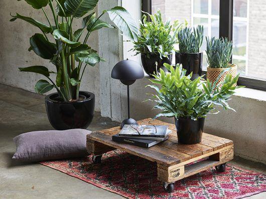 Grønne planter, Strelitzia, Phlebodium,