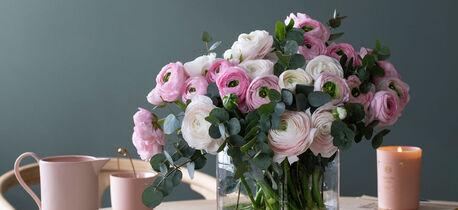 ranunkler i rosa