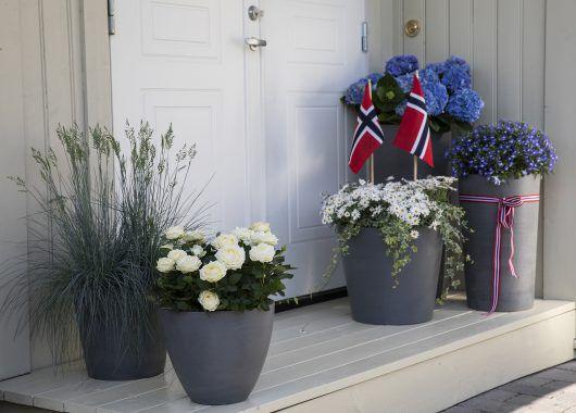 inngangsparti med vakre sommerblomster til 17. mai