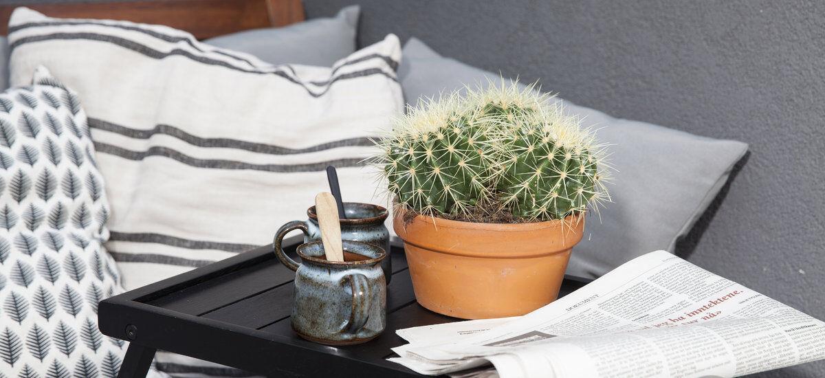 Sukkulent og kaktus