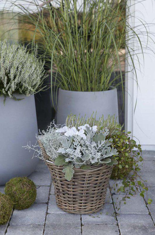 høstgruppe i grågrønne toner  med Calocephalos_sølvkrans_muhelenbechia og hvit lyng