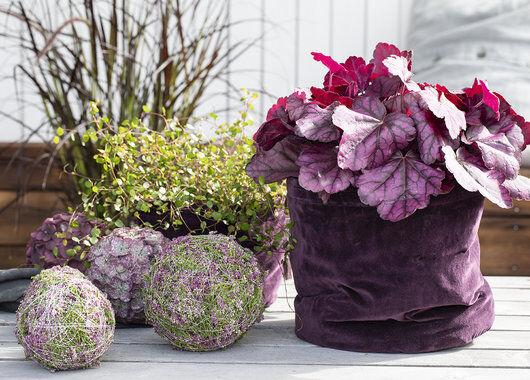 høst med lyngkuler og hauchera i grow-in