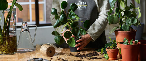 Grønne planter ompotting