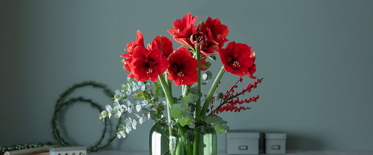 amaryllus og eucalyptus i vase til jul