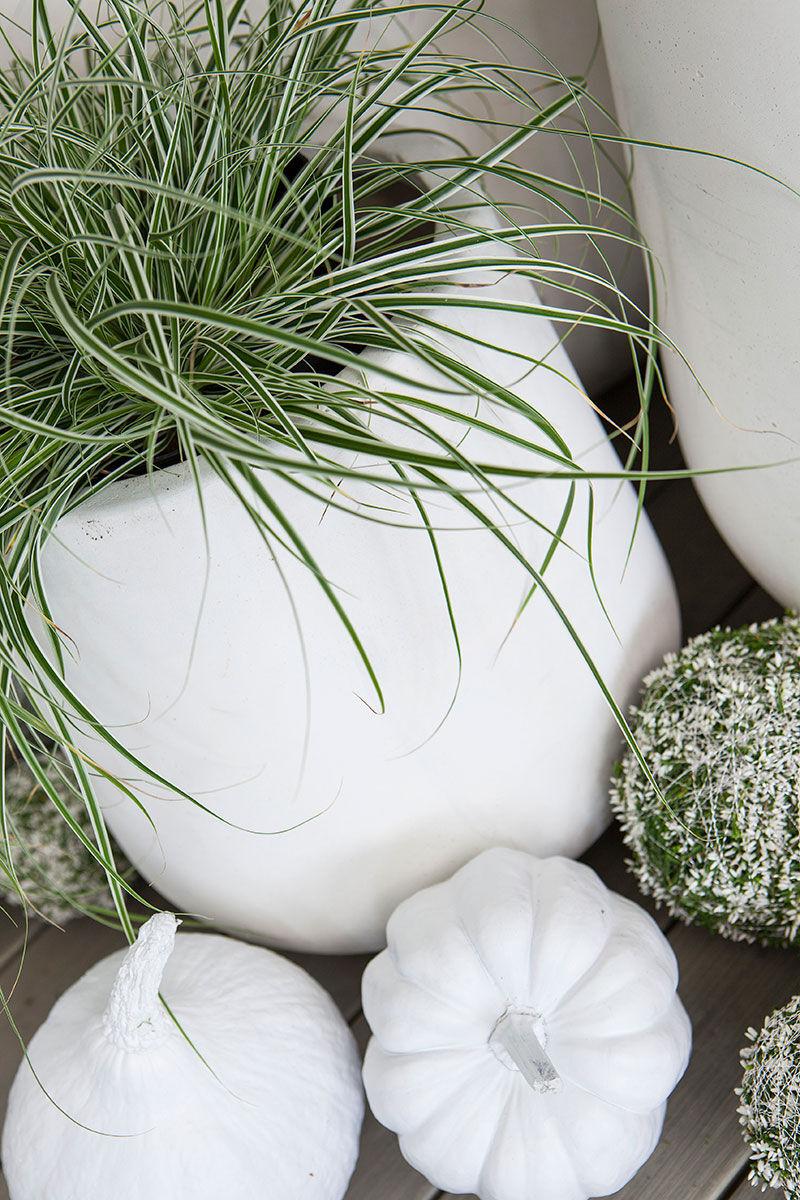 spraymal gresskar i sort eller hvitt for å skape den rette atmosfæren