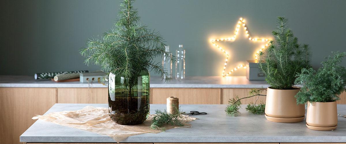 vintegrønne planter inne