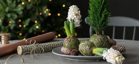 dekorative mosekuler