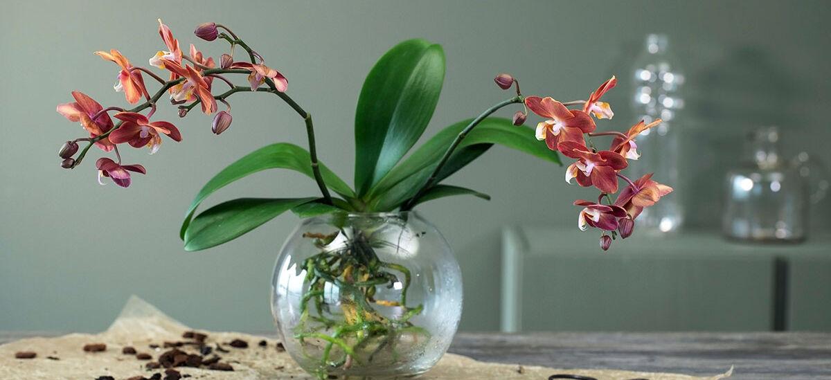 orkide i en vase