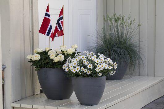 Inngangsparti, potteroser, margeritter, flagg