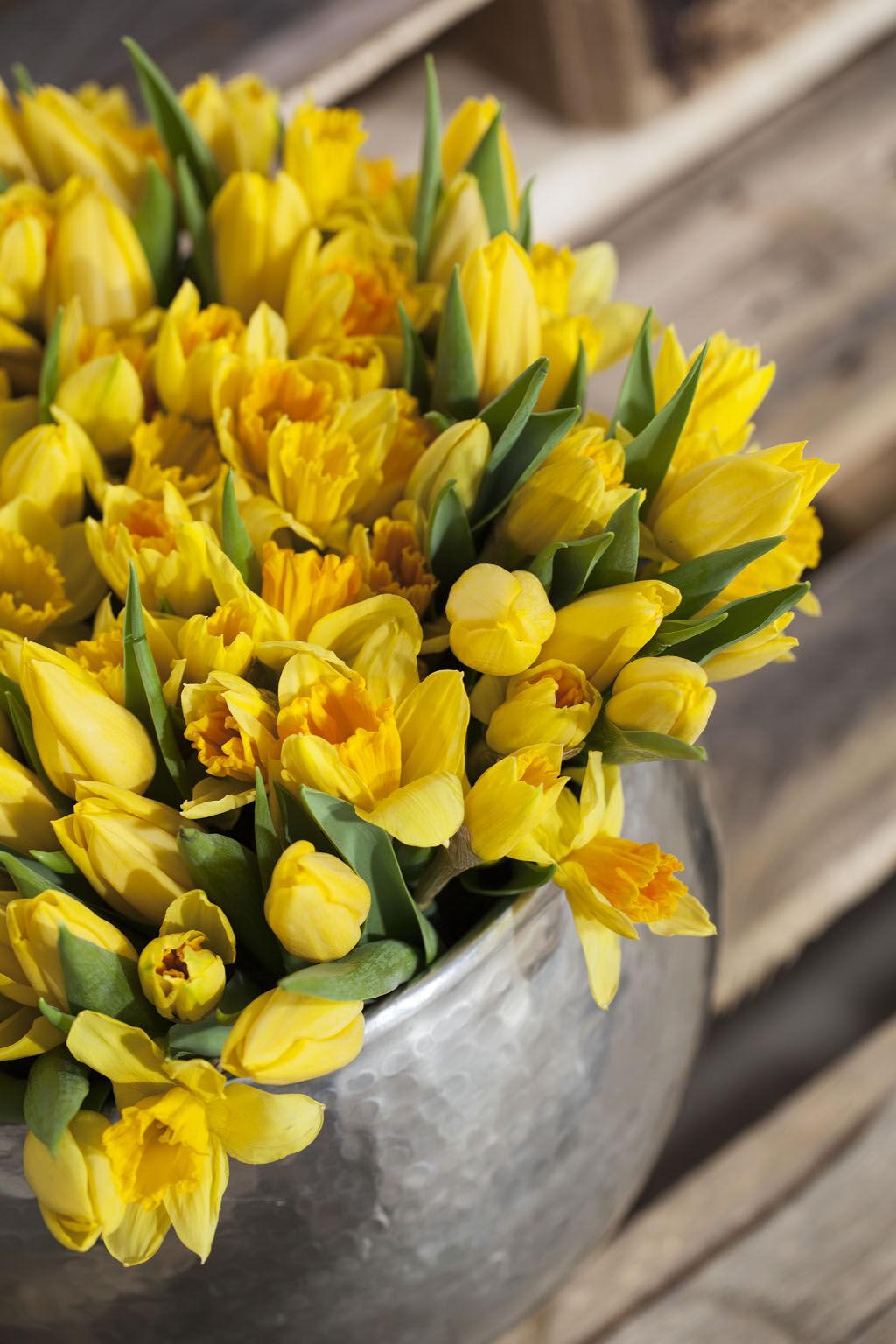 potte full av gule tulipaner og påskeliljer