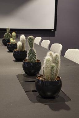 kaktus i kontorlandskap