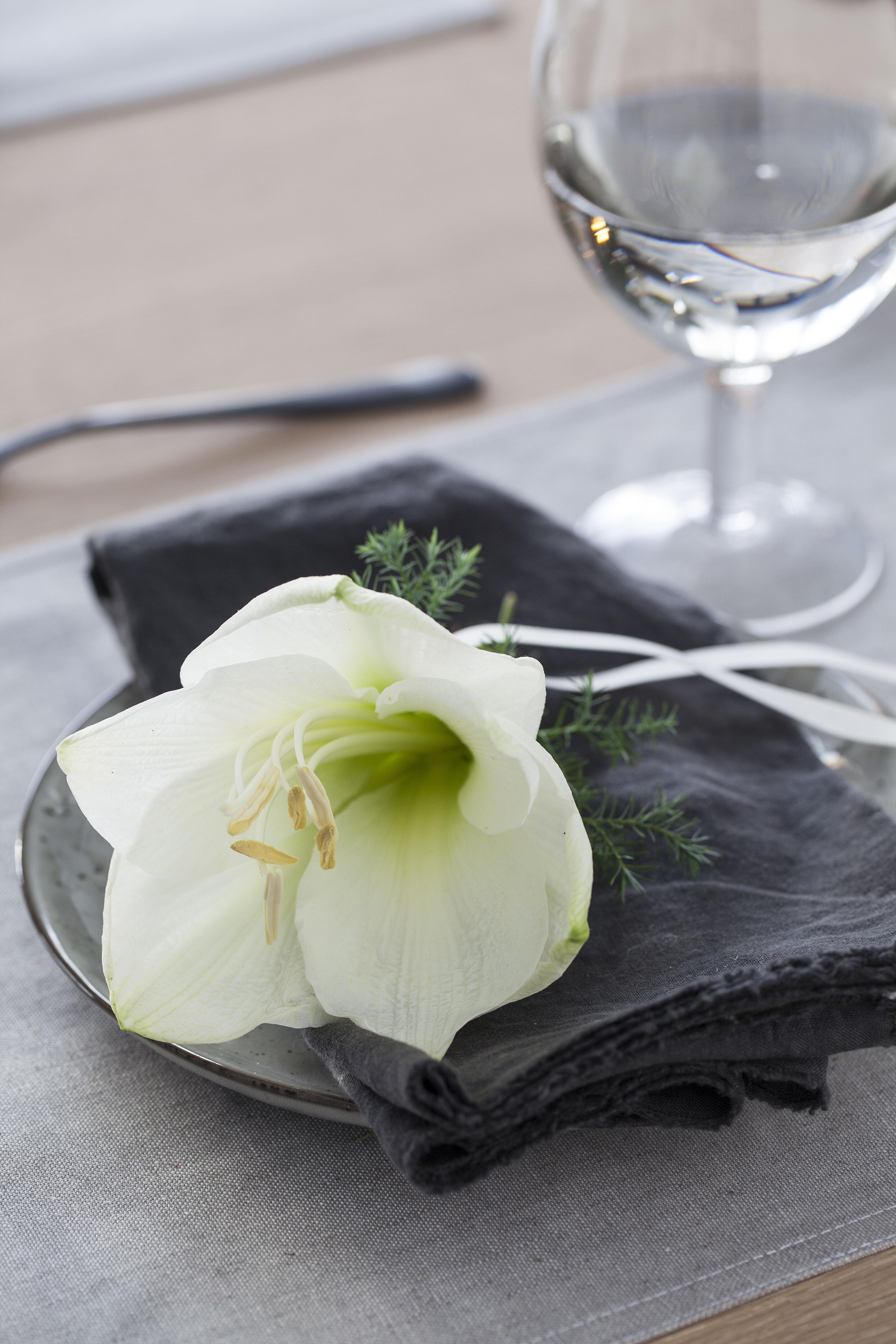 hvit amaryllis er lekkert på kuverten