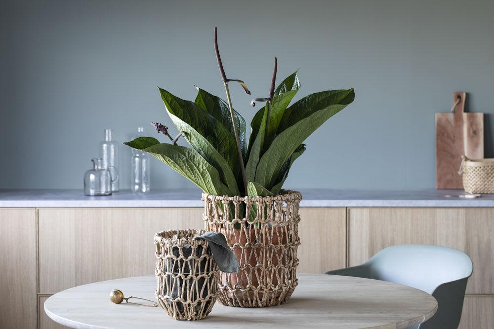 Hyacinthkurvene med grønne planter