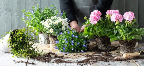 Plante i potte