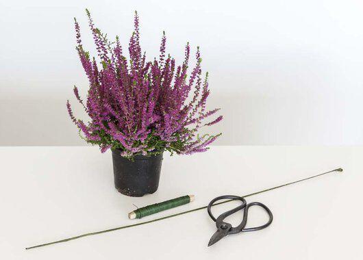 Du trenger 1-2 lyngplanter, en god saks og ståltråd