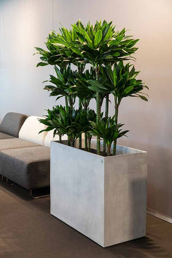 Grønne planter på kontoret