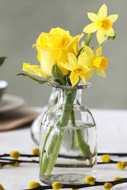 gule påskeliljer er et sikkert vårtegn