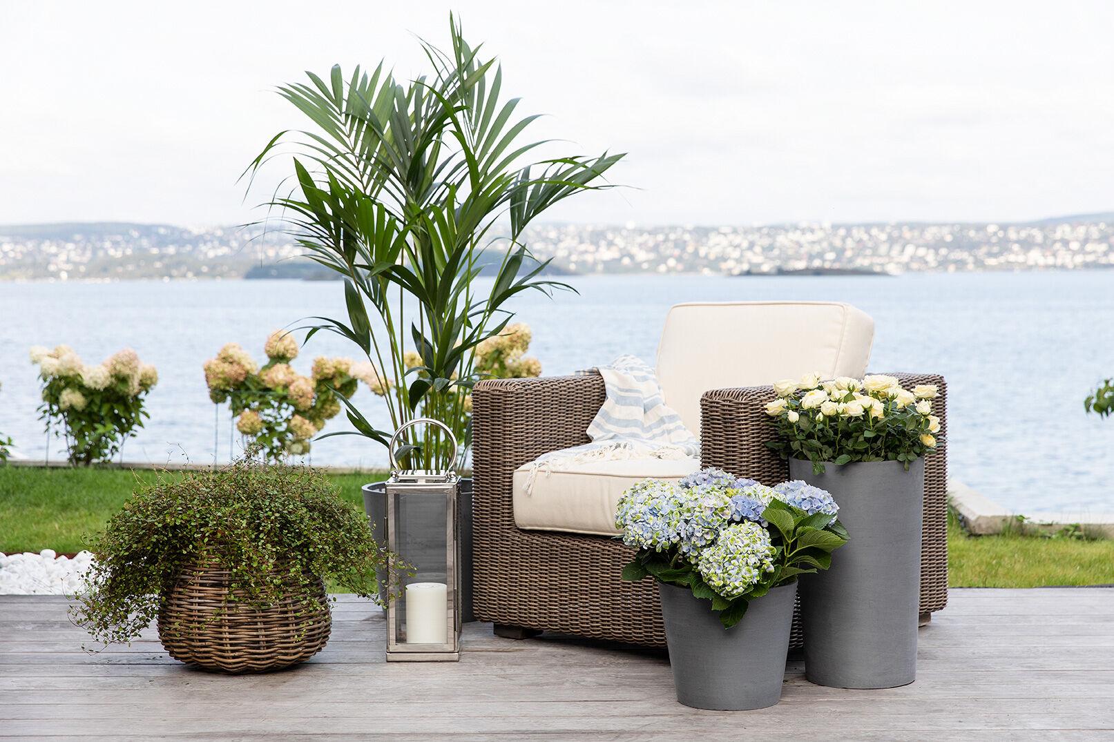 grønne planter og sommerblomster er fint å kombinere