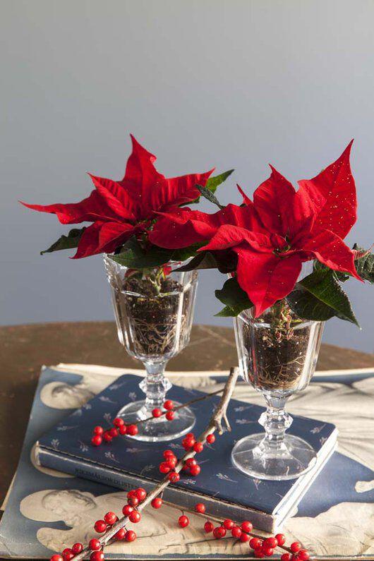 julestjerner i glass