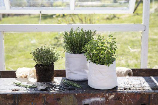 Krydderurter i Grow-in potter. Rosmarin, oregano og mynte.