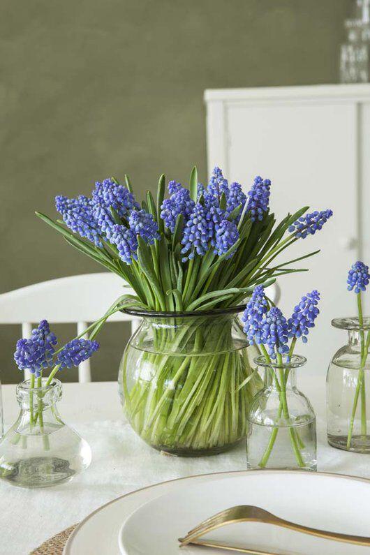 nydelige himmelblå perleblomster i vase