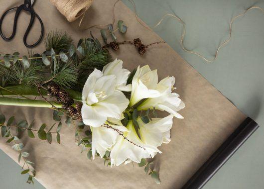 hvite amaryllis og vintergrønt