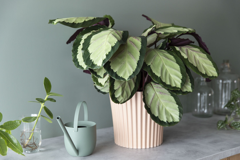 Grønne planter er viktigere enn noen gang i interiøret