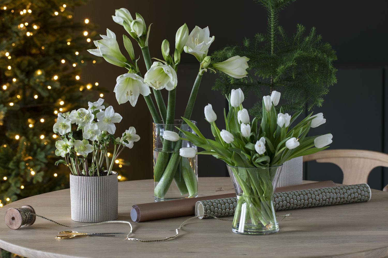 Hvite juleblomster