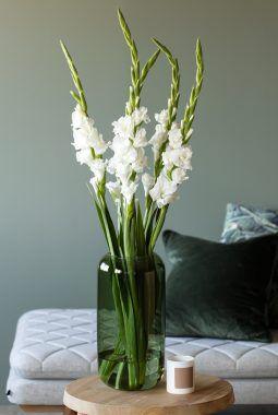 Leaf vase med gladiol