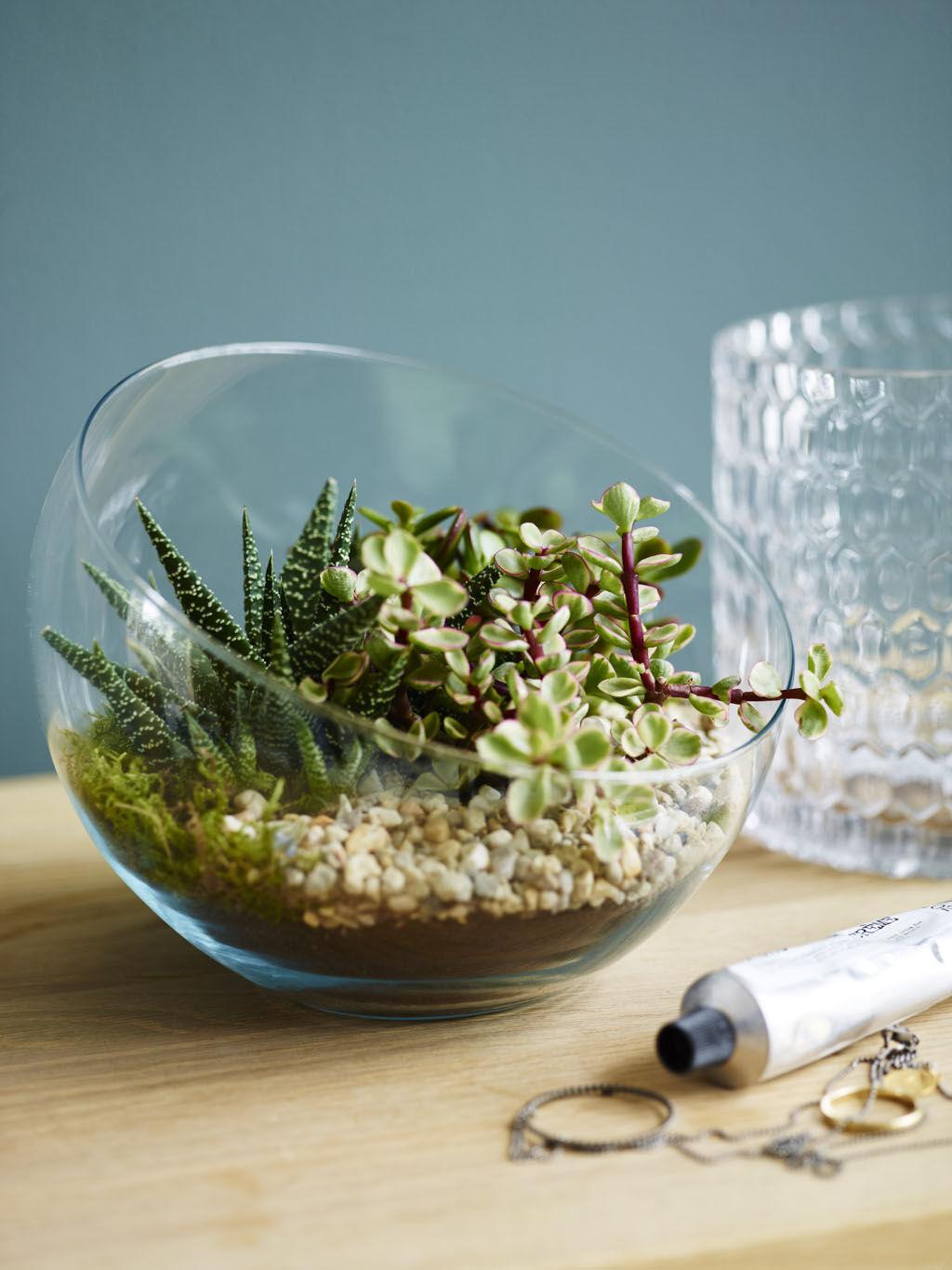 Stilig med sukkulenter og kaktuser i terrarium