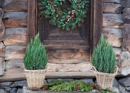 inngangsparti med vintergrønne busker