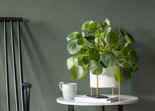 pilea_grønne planter