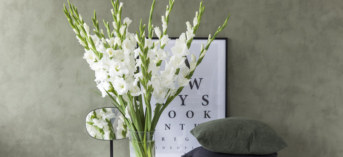 hvite gladioler