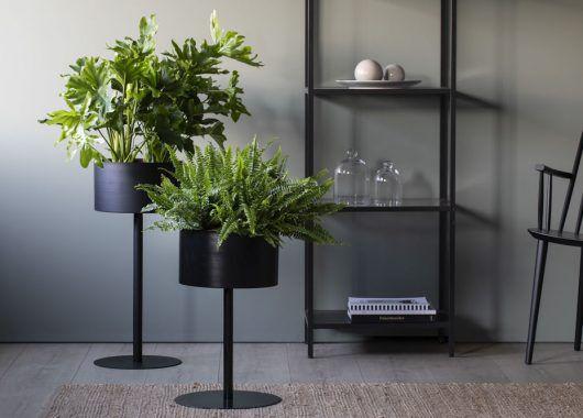 Philodendron selloum og bregne