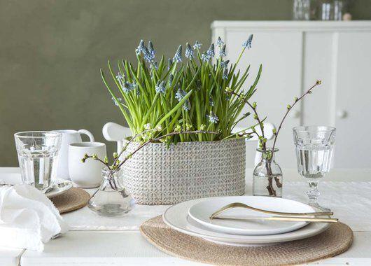 pynt bordet med perleblomst som løkblomst i potte