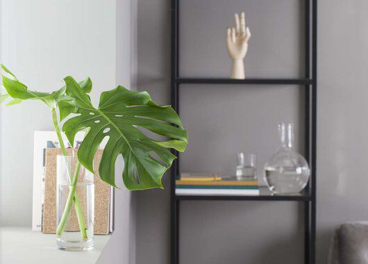grønne planter monstera blad i vase