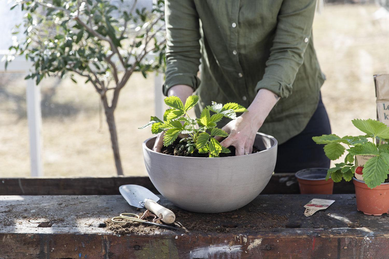 Plante i utepotter