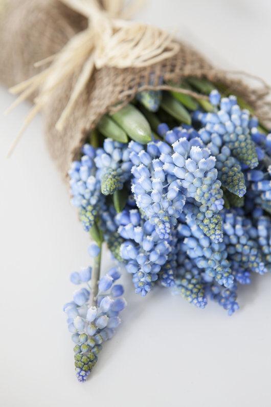 muscari er søte i små vaser