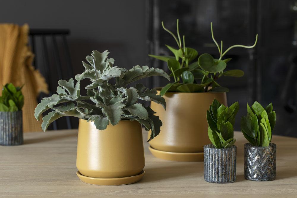 Stilig med grønnplanter i de nye Eternity pottene.
