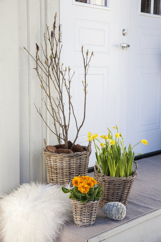 inngangsparti med magnolia, narciss og primula