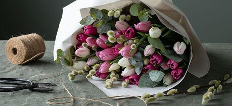 tulipaner med gåsunger