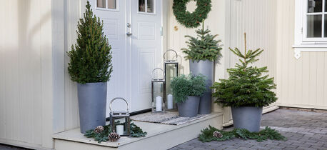 Slik steller du vintergrønne busker