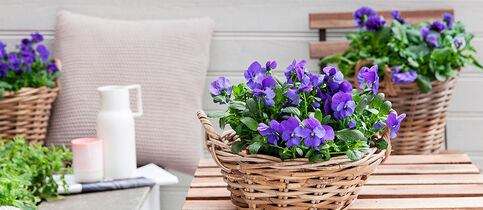 Tilbud på blomster