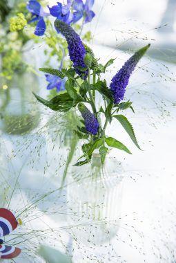 blå Veronika er fint sammen med det friske grønne