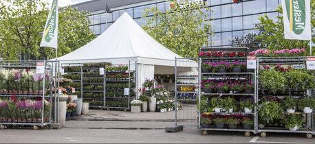 Blomstermarked ute Mester Grønn