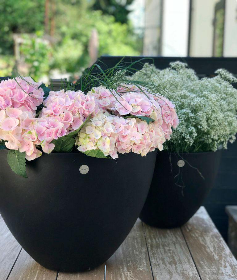 Cosapots med hortensia