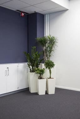 grønne planter i kontorlandskap