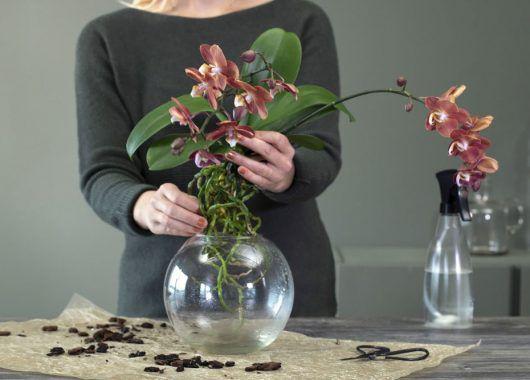 Sett orkidéen ned i en egnet glassvase