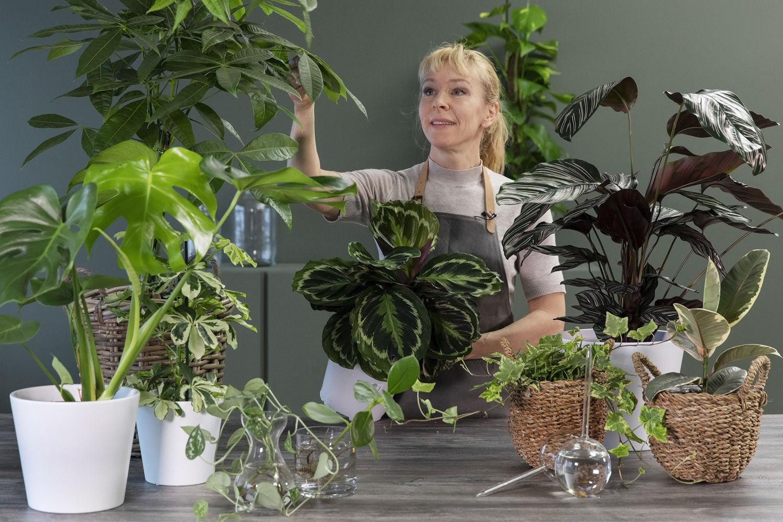 Stelletips grønne planter
