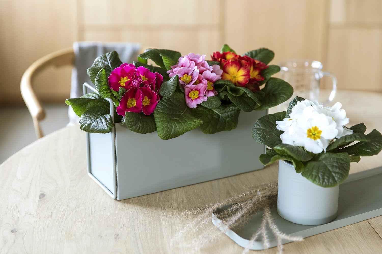 Herbaria og Leaf glassvaser